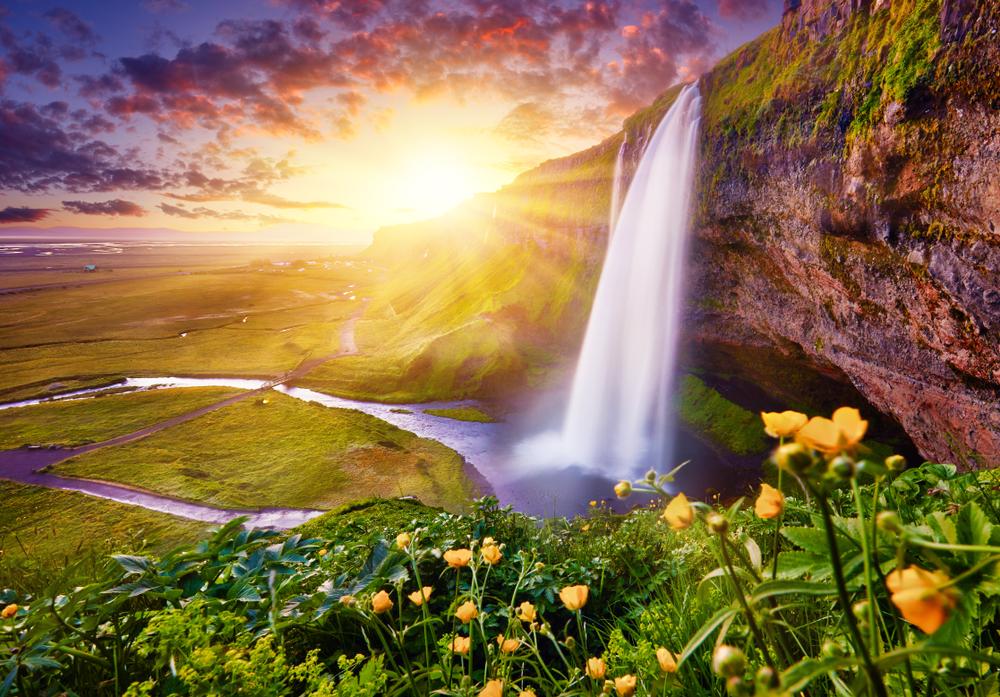 Seljalandsfoss waterfall at sunset with yellow wildflowers