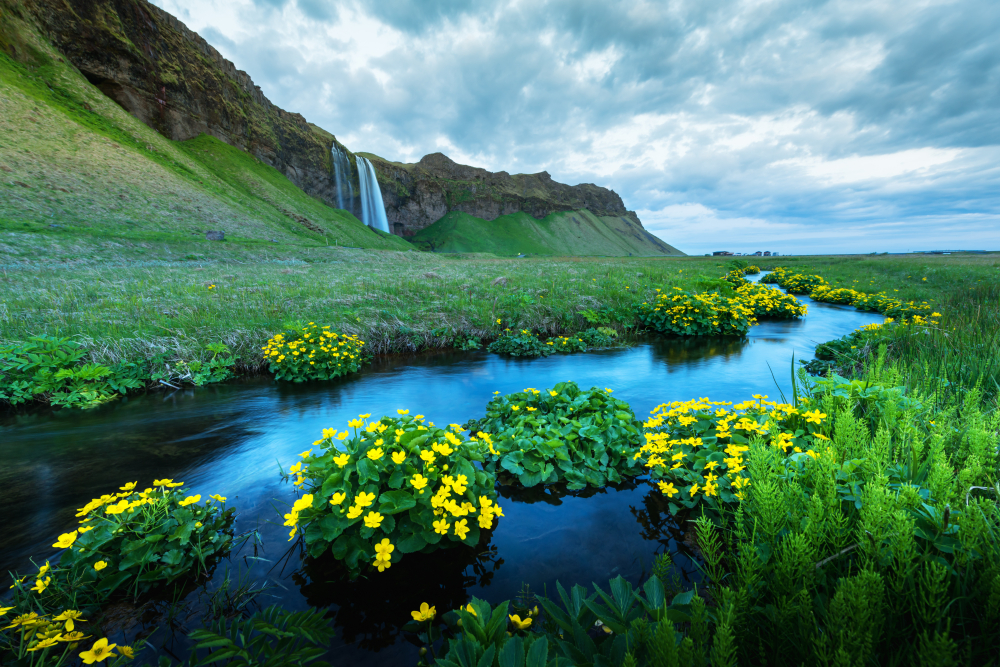July and August are the best months to visit Iceland for festivals!