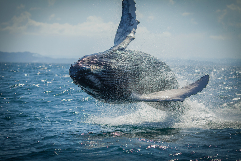 whale watching is one of the best iceland tours