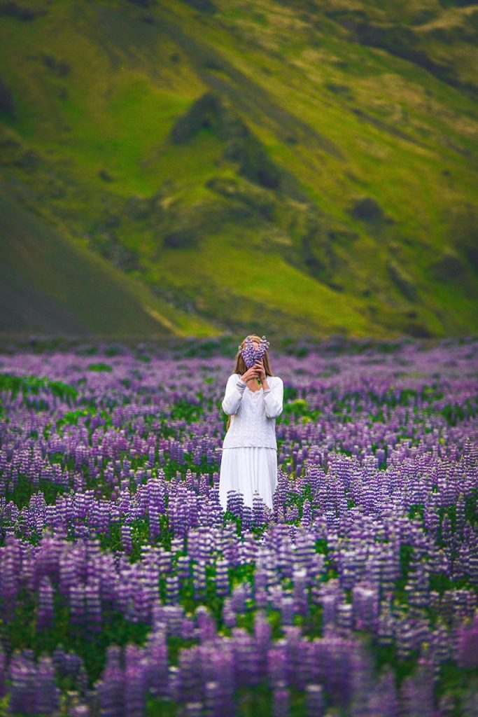 woman in white standing in purple lupine field Iceland wedding