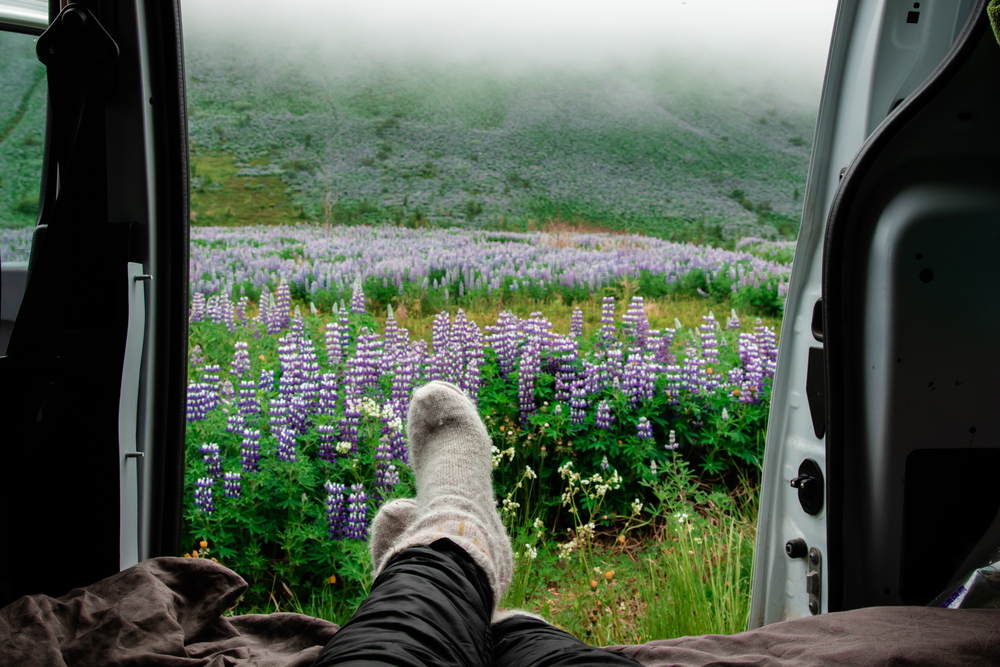 Open campervan doors looking out at a field of lupine flowers.