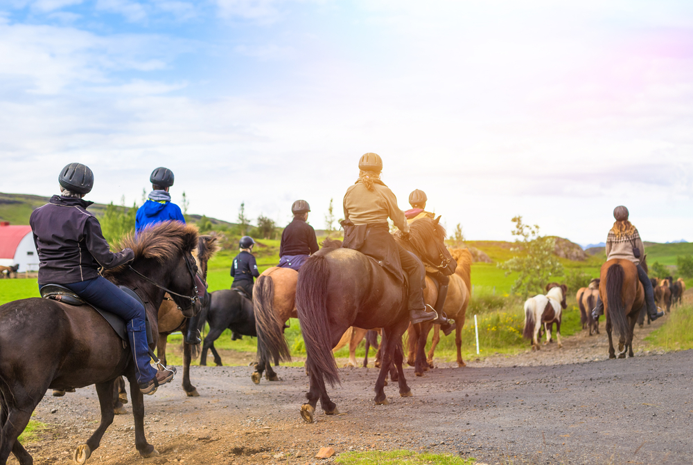 A group of people horseback riding in a Icelandic landscape. The grass is very green and they are crossing a paved road.